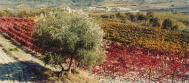 Red Wines Production